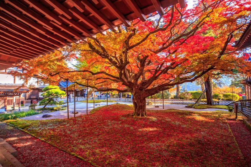 2020年最新】秋の行楽!九州各県の紅葉の名所特集 九州への旅行や観光 ...