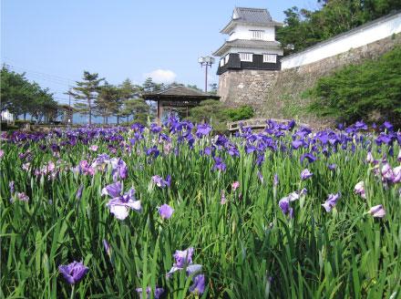 季節の花と樹木九州への旅行や観光情報は九州旅ネット