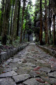 5dba2cc2b1 石畳の道(草枕ハイキングコース)|九州への旅行や観光情報は九州旅ネット